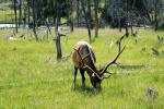 Yellowstone_15.jpg