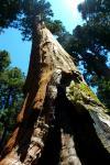 Sequoia_02.jpg