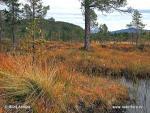 Národní park Anderdalen